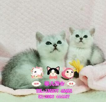 真实小猫图片大全可爱