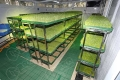 菜立方:芽苗菜种植是一个划时代的朝阳平台