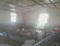 養殖場豬舍降溫系統設備