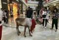 动物展览哪里有出租羊驼萌宠展览动物的