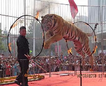 海狮表演出租 马戏团动物表演