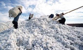 中国 北京 棉花/摘棉花机大型棉花采摘机价格倍力特多功能棉花采摘机