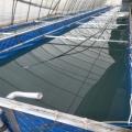 帆布魚池生產廠家 帆布魚池加工定做 帆布蝦池高密度