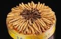 南海回收蟲草-現權威公布南海回收冬蟲夏草價位