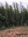 濮陽2公分鋼竹園林綠化選擇