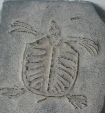乌龟脚印简笔画
