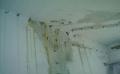 蘇州專業樓頂 屋面 陽臺 衛生間 防水補漏