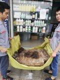东莞白蚁防治协会单位、龙科白蚁虫控精湛技术