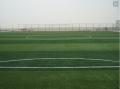 足球场人造草皮造价预算