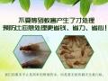 上海家庭除白蚁 上海西餐厅抓蟑螂 上海食品厂杀白蚁