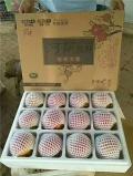 突尼斯软籽石榴福建多少钱一斤?