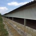温室养殖场卷帘布 猪场卷帘 猪场卷帘布加工