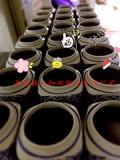 景德镇陶瓷罐子厂家