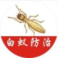 上海杀虫服务公司 上海驱逐跳蚤 上海专业抓鼠
