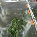 全自动气泡清洗机 果蔬蔬菜喷淋清洗设备