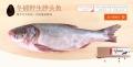 鄂尔多斯查干湖鱼销售