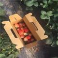 白雪公主草莓苗出售价格、白雪公主草莓苗出售基地