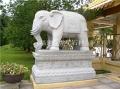 雕刻石雕大象 汉白玉石象 大象石雕摆门口