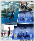 丰城海洋展出租海狮表演低价格租赁