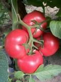 生根膨果水溶肥快速提苗膨果增产