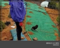 山东抗冲生态毯厂家 现货植生毯 边坡绿化植草毯植被