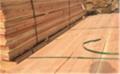 三门峡建筑木方一立方价格