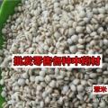 薏苡仁产地直销 大颗粒薏米 无味无熏