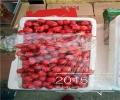朱砂红樱桃树苗基地批发、今年的朱砂红樱桃树苗苗圃