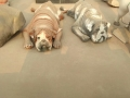 玻璃钢雕塑彩绘仿真动物沙皮狗癞皮狗小狗摆件装饰