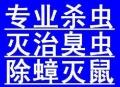 上海如何根除白蚁 上海商场驱蟑螂 上海白蚁防治工程