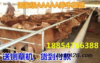 2017养牛的利润与成本养牛怎么样