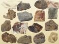 如何交易古化石大利益化