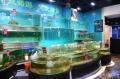 广州酒吧观赏鱼池订做,广州订做KTV观赏鱼池订做