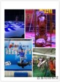 胶南萌宠羊驼展览出租节日预定