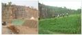 六盘水荒地空白处绿化草种草籽