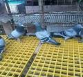 化工冶金扁铁钢盖板A北京扁铁钢盖板A扁铁钢盖板