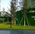 绿草皮墙面价格多少钱