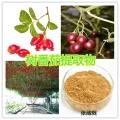 纳西族树番茄提取物 树番茄果粉 树番茄浓缩汁