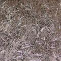 闵行区报废钨丝回收销毁为一体的加工厂