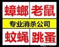 上海食品厂杀白蚁 上海对付白蚁 上海驱跳蚤公司