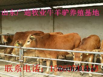 一头牛的重量_志趣网