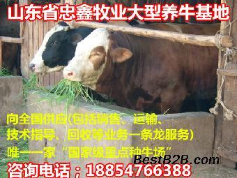一头牛有多重农村养小牛犊赚钱吗_志趣网