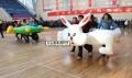 户外亲子工会趣味运动会器材龟兔赛跑