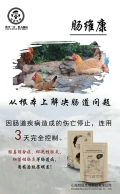 肉鸡肠炎特效药——肉鸡肠毒综合症特效药——肉鸡球虫