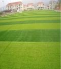 七人制人造草坪足球场草坪安装