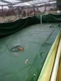 卓越鱼池定制防水帆布池水池厂家-篷布水池价格
