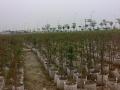 美植袋对环境无污染,对人、畜和植被无毒