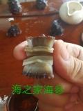 微达海参礼盒。品质好泡发率高营养价值丰富肉质肥厚