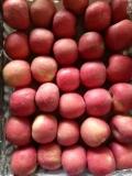 陕西红香酥梨产地价格 红富士苹果基地批发
