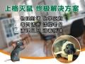 上海公司灭老鼠 上海害虫防制 上海商场杀白蚁